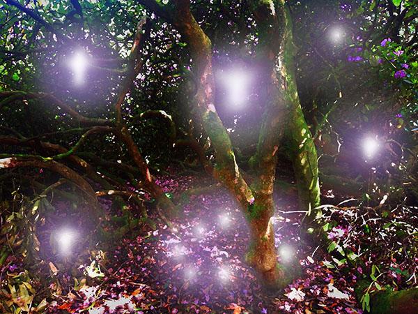 Fairy Circle
