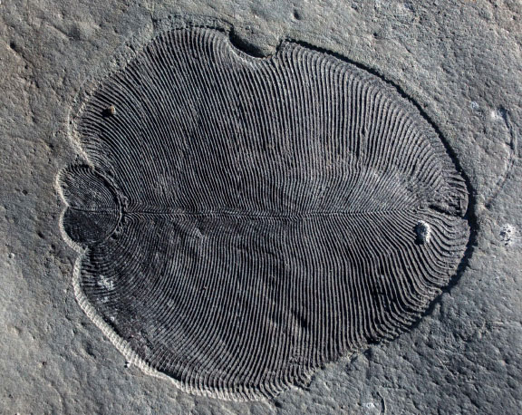 Scientists Conclude Mysterious Fossils Were Animals, Not Fungi