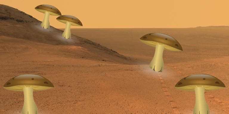 NASA Propose 'Mushroom House' Design for Mars Colonists