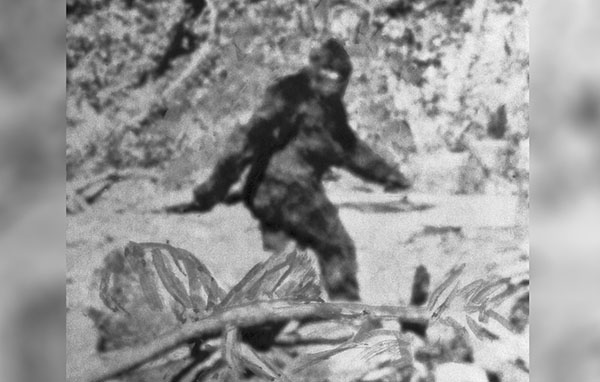 Supporters Beg for Bigfoot to Be Left Alone after Hunting Plan