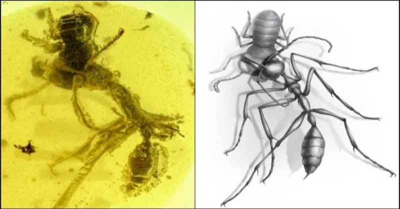 'Hell Ant' Found in 99 Million-year-old Amber