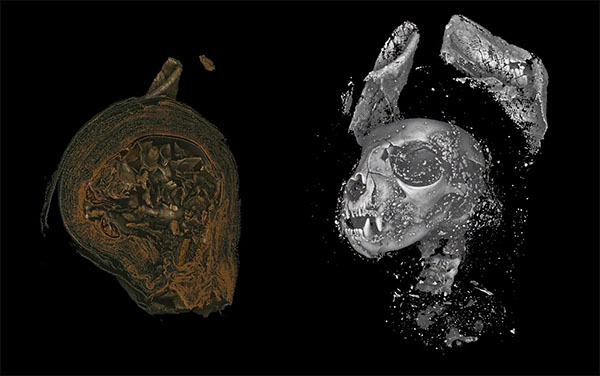 3D Imaging Reveals Ancient Lives of Egyptian Animal Mummies