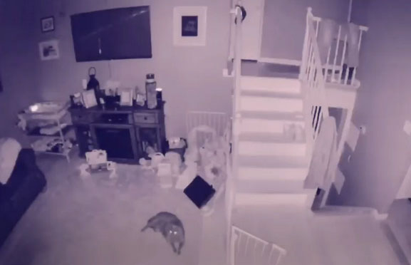 'Ghost of Boy' Caught on Home Security Footage?
