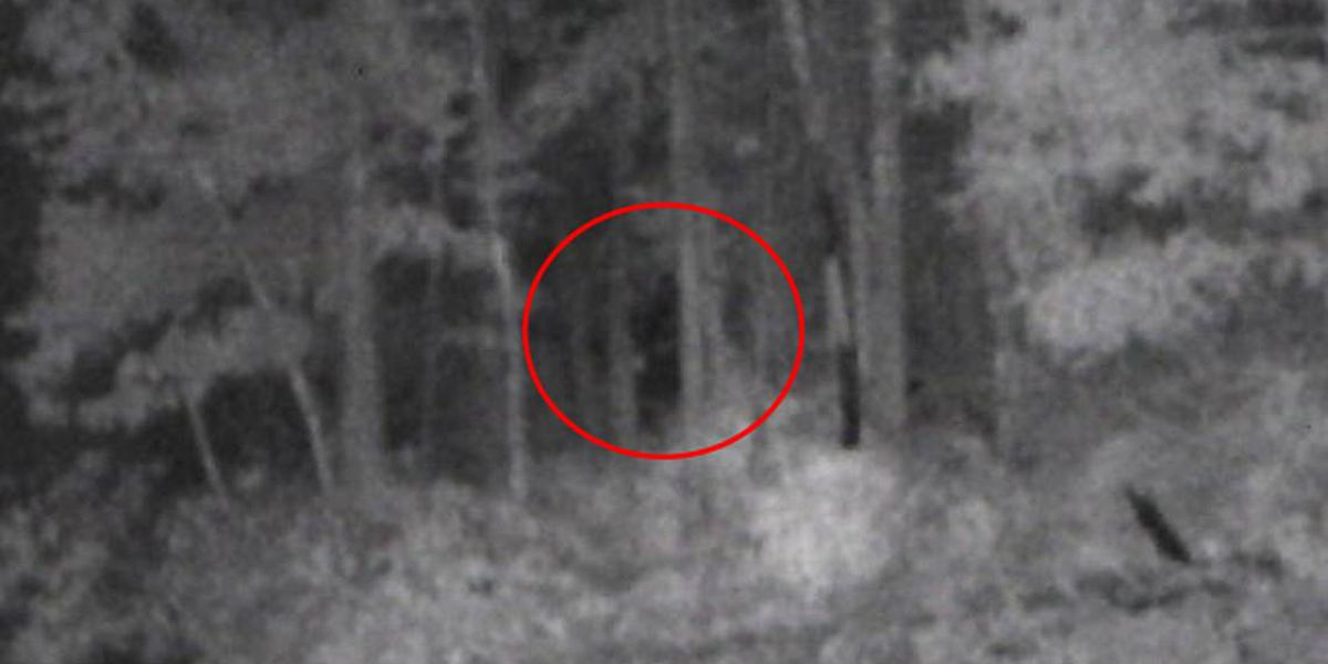 Shadowy Image Captured in North Carolina 'Ignites Bigfoot Fever'