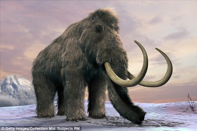 Paypal Founder 'Bankrolls' Woolly Mammoth Resurrection Project
