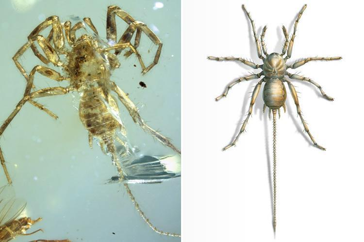 Ancient 'Spider with Tail' Discovered Trapped in Amber