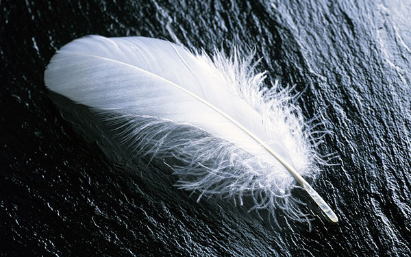 Do Departed Love Ones Use White Feathers to Communicate?