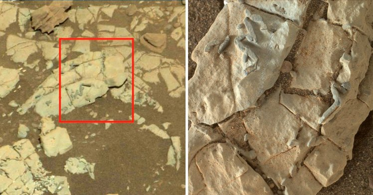 Possible 'Ancient Fossils' Spotted by NASA Curiosity Rover on Mars
