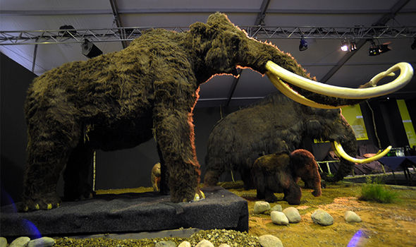 Woolly Mammoth Cloning Plans Approved in Siberia