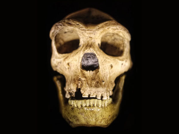 Humans and Neanderthals Evolved from 'Mystery Common Ancestor'