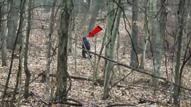 Pair Claim to Have Captured 'Bigfoot' on Camera in Ohio