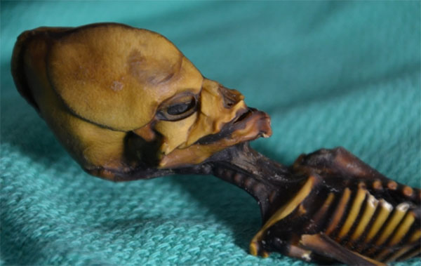 Dr Steven Greer Refutes Atacama Skeleton Study Claims