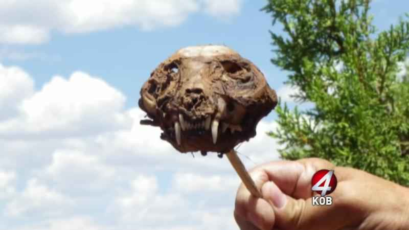 Treasure Hunter Believes He Found a Chupacabra Skull