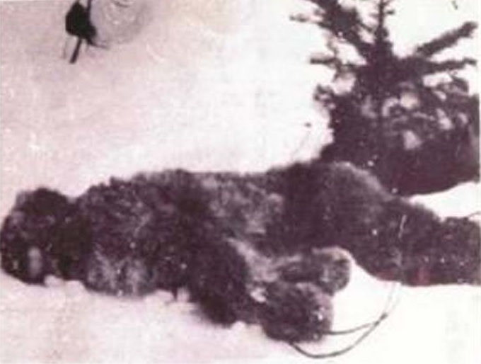 'Oldest Bigfoot Photo' Suggests Cryptozoological Conspiracy